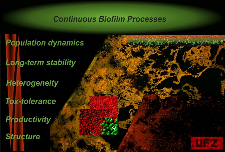 Catalytic Biofilms Group