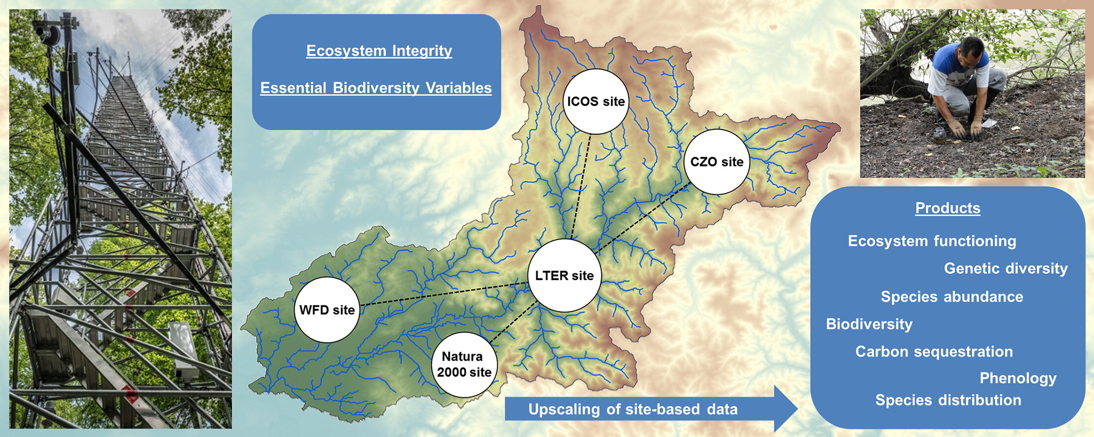 The next generation of site-based long-term ecological monitoring: Linking essential biodiversity variables and ecosystem integrity