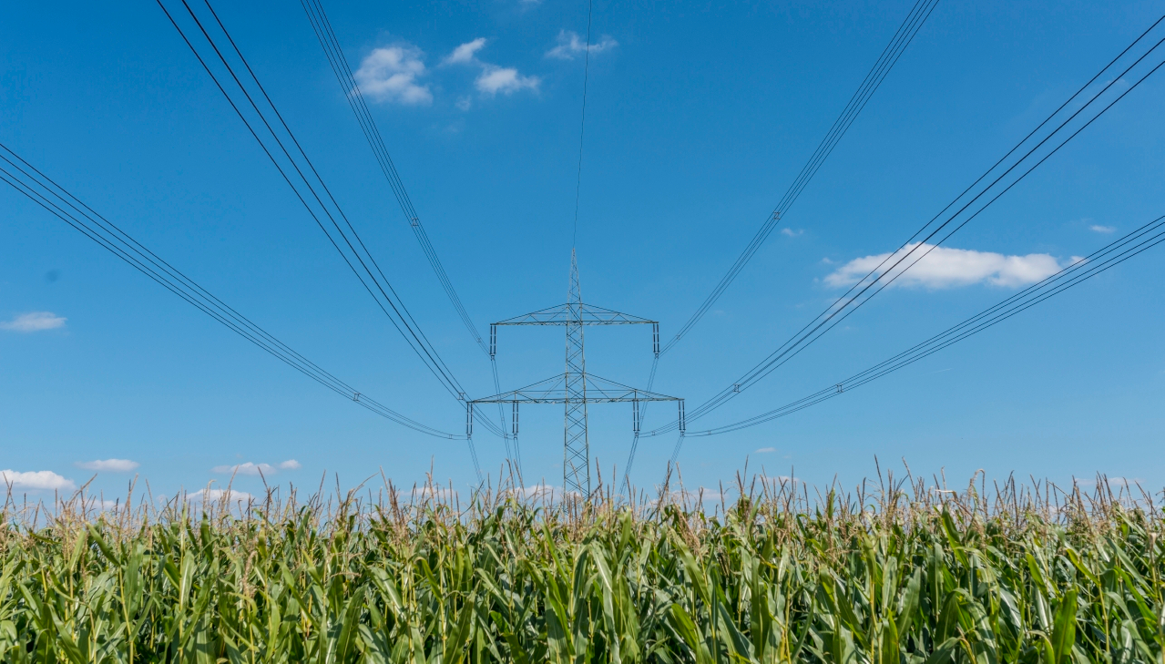Power Transmission on cornfield. Source: A. Künzelmann / UFZ