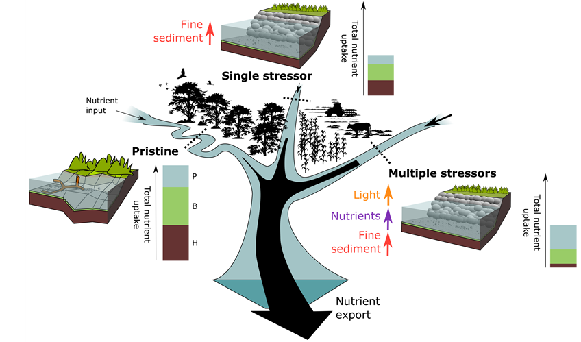 Nutrient uptake in streams draining catchments with different land use and stressor scenarios. Scheme: Daniel Graeber/UFZ