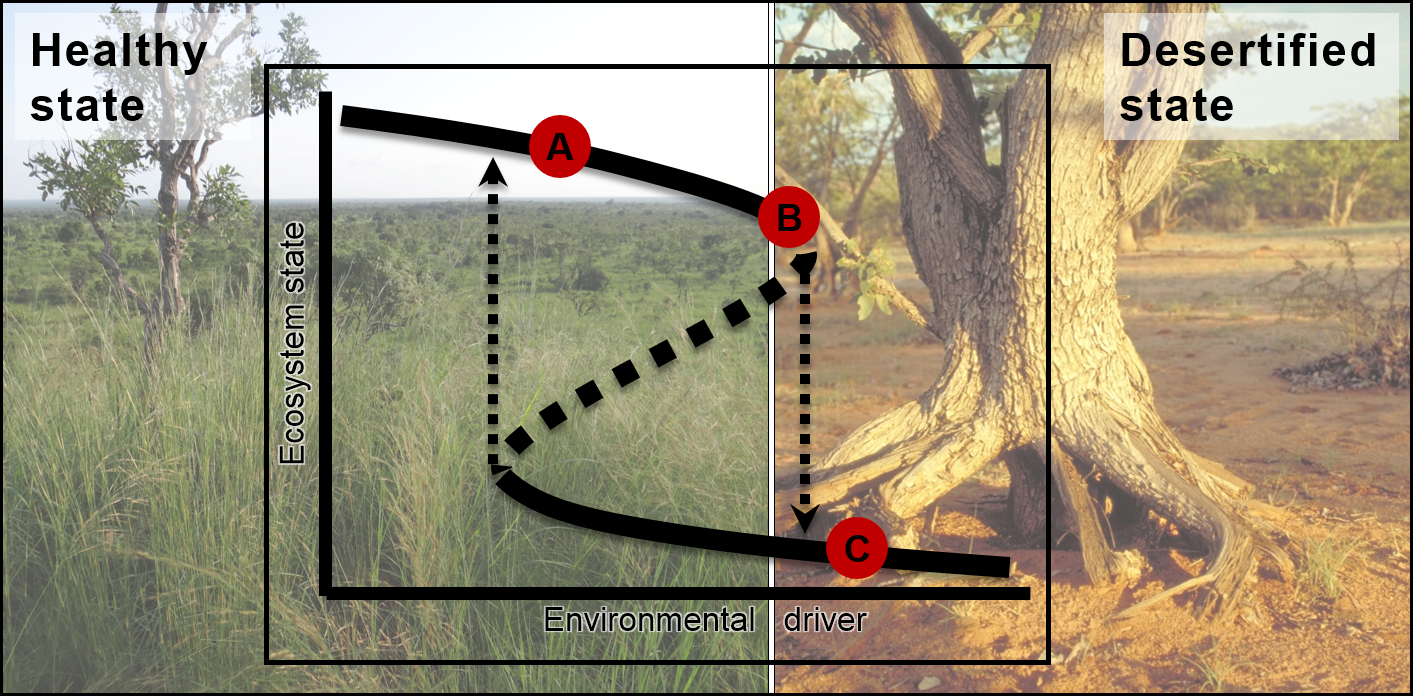 Schematic representation of the desertification tipping point (DTP) in an African savanna at which the ecosystem switches from a healthy state where the grass layer is dominated by perennial bunchgrasses (A,B) to a desertified state (C) characterized by bare soil, erosion and depleted seed banks. The switch follows a hysteresis pattern.