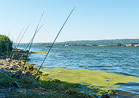 Rivers such as the Danube are fascinating ecosystems. Photo: André Künzelmann/UFZ