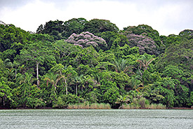 A diverse, lowland tropical forest in the Panama Canal.