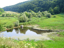 Amphibian pond in an intact landscape.