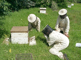 Beekeepers and bee colonies