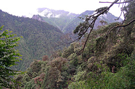 Mountain forest in Yunnan, habitat of the new species