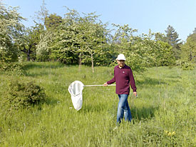 Dr. Xiushan Li doing transects within the German Butterfly monitoring scheme.