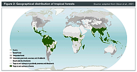 Geographical distribution of tropical forests