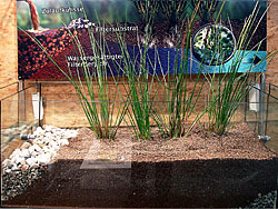 Constructed wetlands in a model