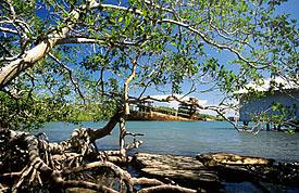 Mangrovenwald in Kerala, Indien
