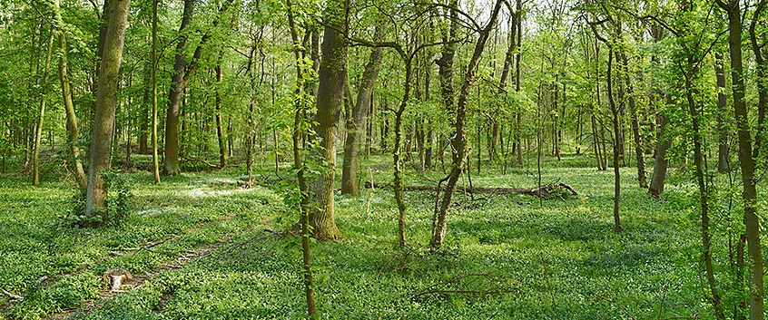 environmental biology research papers There are a wide variety of research topics available to processes of environmental space agriculture and biology back to research.