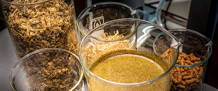 Bioenergy. Photo: André Künzelmann/UFZ