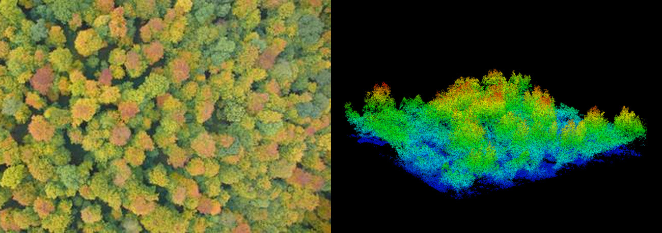 Canopy photo and LiDAR scene