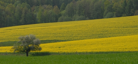 Agricultural lands in Europe: not all is ugly and bad. Photograph: Guy Pe'er, 2009. All rights reserved