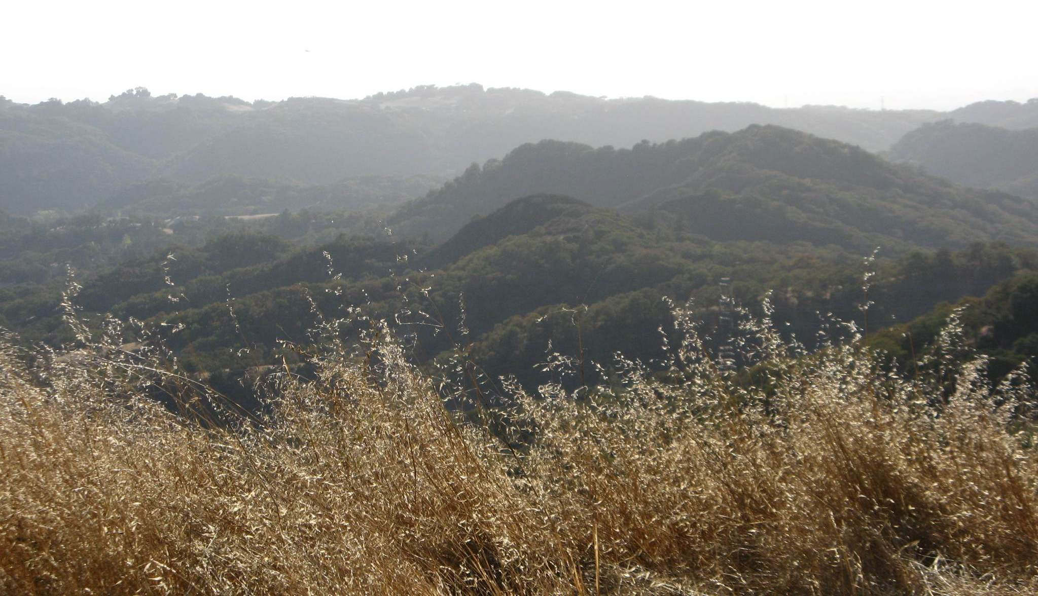 Californian grassland