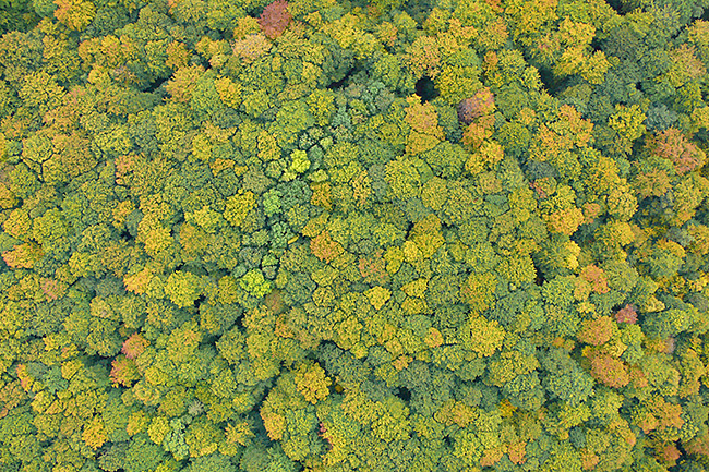 Top tree image of Hainich recorded from an UAV