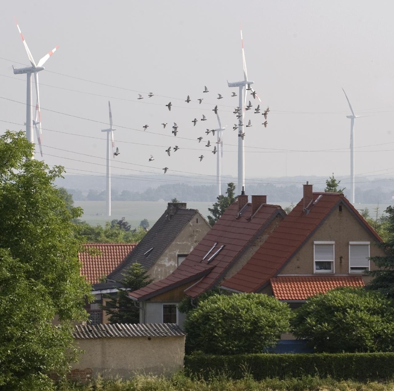 Wind power and Settlement