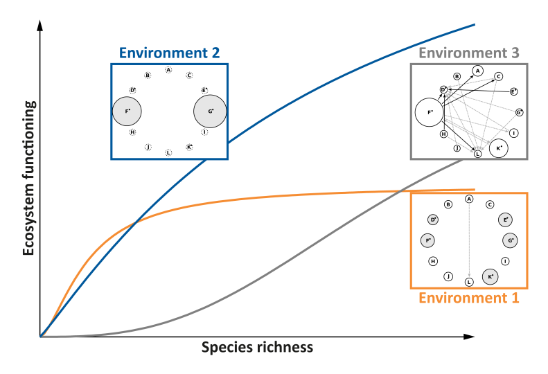 successional stages of benthic communities