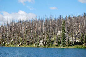 Dead trees destroyed by forest fire